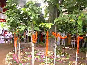 Karam (festival) - Karma/Karam puja in Jharkhand
