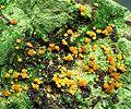 Kasolite-Malachite-162839.jpg