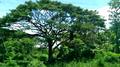 Kekirawa view31.png