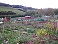 Kenton village allotments - geograph.org.uk - 1572846.jpg