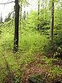 Kleť (přírodní rezervace), porost.jpg