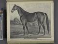Knickerbocker. John E. Wood, Middletown, Orange Co., N.Y. NYPL1652219.tiff