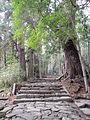 Kumano Kodo pilgrimage route Daimon-zaka World heritage 熊野古道 大門坂21.JPG