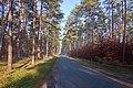 LSG Forst Rundshorn IMG 2301.jpg