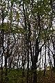 LSG L 54a Kühlung - Gespensterwald Nienhagen (9).jpg