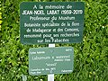 Laburnum x watereri in Jardin des Plantes de Paris 05.jpg