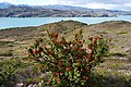Lago Nordenskjold - Torres del Paine - panoramio (4).jpg