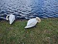 Lake Eola (30335553116).jpg