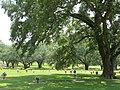 Lakewood Memorial Park (7665457870).jpg
