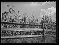 Lancaster County, PA, Corn field and rail fence, 1938 by Sheldon Dick.jpg