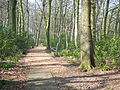 Lancaster University Woodland Trail 6077.JPG