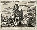 Landschap met paard uit Roemenië. NL-HlmNHA 1477 53011506.JPG
