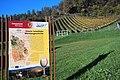 Lavanttaler Weinanbaufläche Gries, Bezirk Wolfsberg, Kärnten.jpg