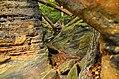 Ledges at Cuyahoga Valley National Park (10544425075).jpg