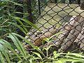 Leopard 041.jpg