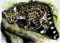 Leopardus wiedii - Tigrillo Boliviano - Joel Huanca Martinez.jpg