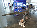 Library of Birmingham - dinosaur - Velociraptor (27578469543).jpg