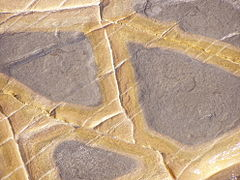 Limestone detail.jpg