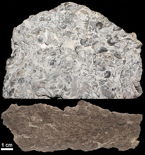 Fossiliferous limestone - Examples of small fossils in limestone.