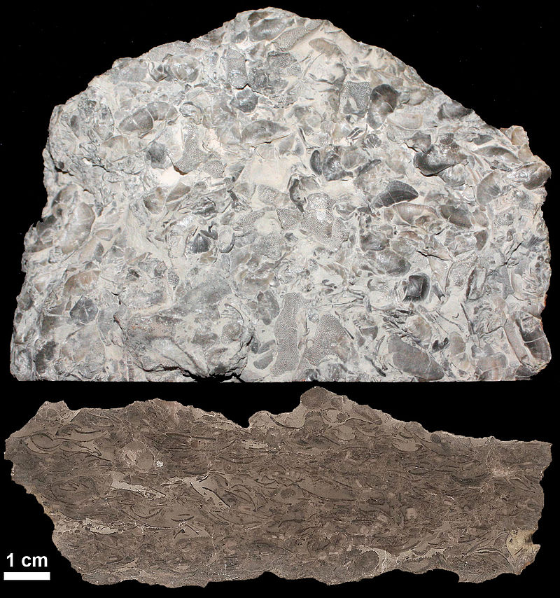 Limestone etched section KopeFm new.jpg
