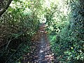 Looking NW along a footpath to Fishbourne - geograph.org.uk - 1020144.jpg