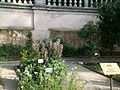Lorto-botanico-di-padova-2016 28340423396 o 06.jpg