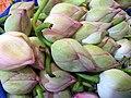 Lotus buds of Tamilnadu.jpg