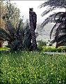 Lover Palms - panoramio.jpg