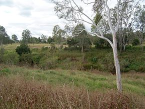 Lower Lockyer Creek.jpg