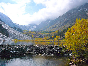 Lundy Canyon Beaver Dam.jpg