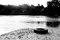 MOs810, WG 2014 48, powiat obornicki (Car tire floating in the Warta, Oborniki).JPG