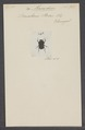 Macroderes - Print - Iconographia Zoologica - Special Collections University of Amsterdam - UBAINV0274 019 06 0002.tif