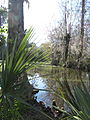 Magnolia Plantation and Gardens - Charleston, South Carolina (8555453387).jpg