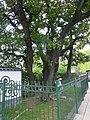 Magnolia histórica 1060346.JPG