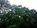Majhgawan, Madhya Pradesh 485661, India - panoramio (13).jpg