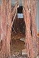 Mangrove express (Biennale Arts actuels, La Réunion) (4133753660).jpg