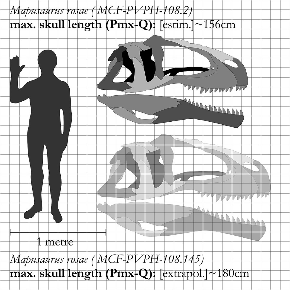 Mapusaurus-skull-comparison