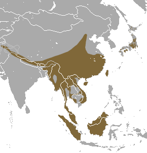 Masked Palm Civet area