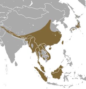 Masked palm civet - Image: Masked Palm Civet area