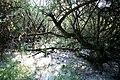 Maya Wendler - GPS 51.201643, 6.883316 - Naturschutzgebiet Unterbacher See 40627 Duesseldorf (15).jpg