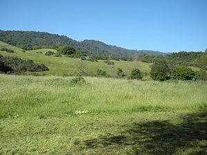 Rancho San Antonio County Park - A meadow grasslands in Rancho San Antonio County Park.