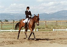 MeredithHodges LuckyThreeSundowner Dressage.jpg