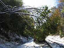 A downed tree with green and yellow leaves suspended by wires next to snow-covered railroad tracks.