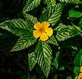 Miami - Fairchild Tropical Botanic Garden - (12259664715).jpg