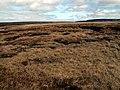 Middle Edge Moss - geograph.org.uk - 406203.jpg