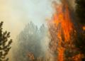 Milli Fire (Oregon) trees torching, USFS 20170824.png