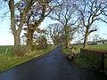 Minir Road Near Wolfcrooks - geograph.org.uk - 284359.jpg