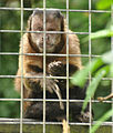Monkey Sanctuary 5.jpg
