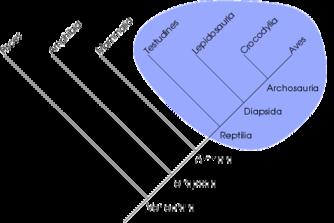 монофилетическая группа