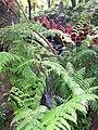 Monte Palace Tropical Garden DSCF0132 (4642484423).jpg